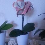Thoir seachad airgead: Origami airson Latha Valentine